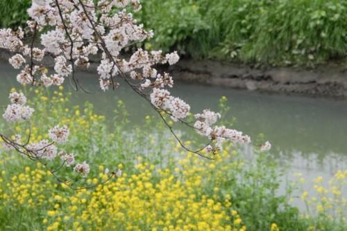 花見散歩2010