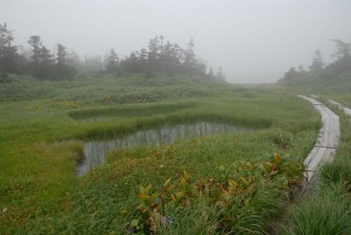 霧の八幡平湿原その2