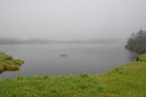 霧の八幡平湿原